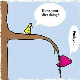 Hows your diet going? (haha)-fuck-you.jpg